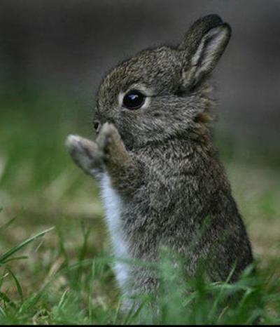 кроль.jpg (40 kb)