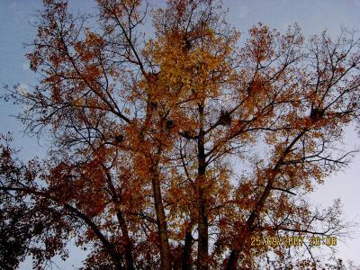 осень2007.jpg (1137 kb)