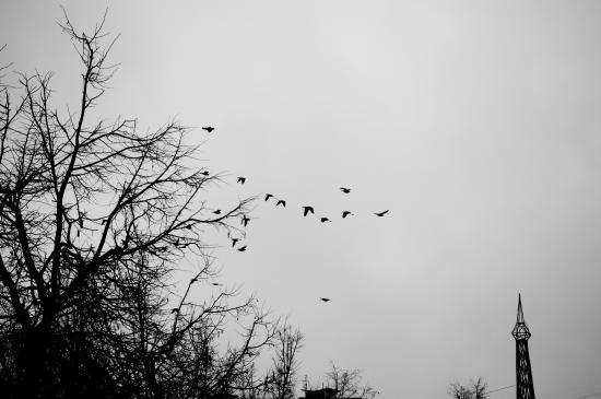 черные птицы (5453 kb)