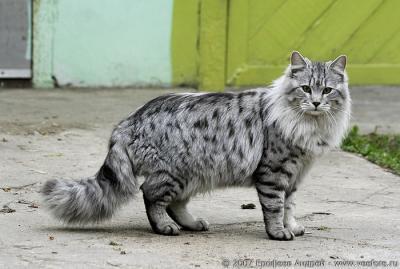 cat_9976.jpg (113 kb)