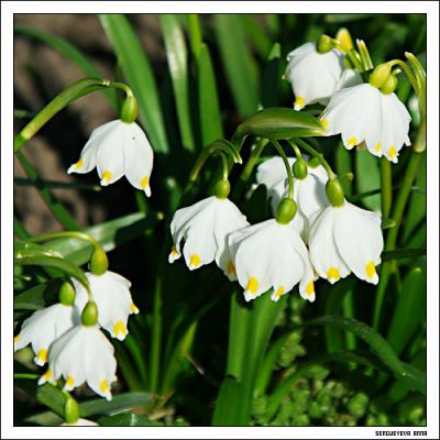 весна (374 kb)