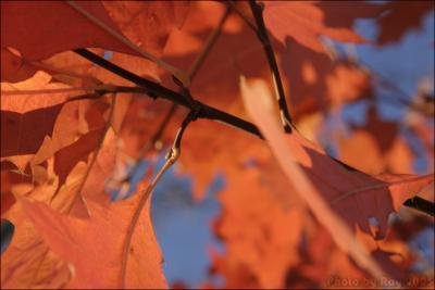 осень (166 kb)