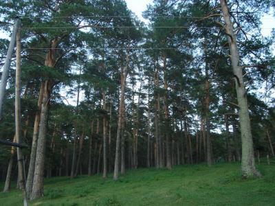 лес.jpg (171 kb)