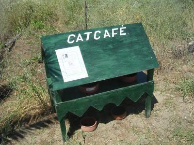 кошачье кафе.jpg (1045 kb)