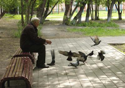 старик и голуби (96 kb)