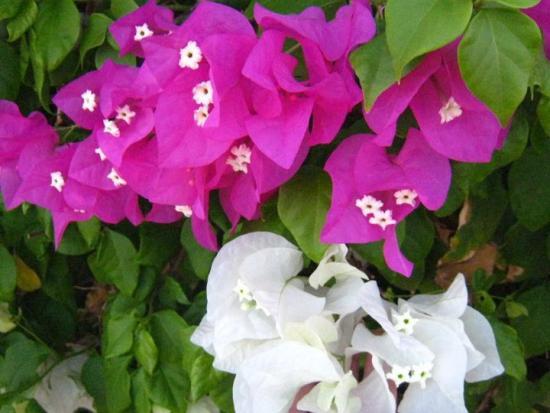 flowers egypt 2.jpg (84 kb)