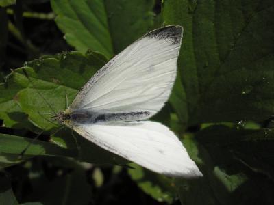 бабочка.JPG (1047 kb)