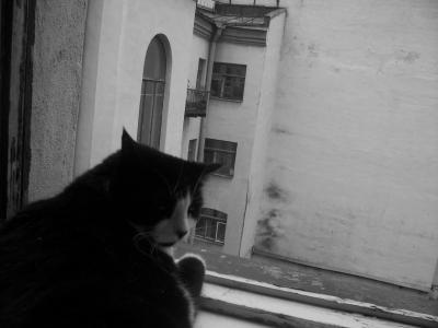 Мой царственный кот (395 kb)